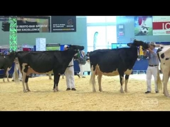 Embedded thumbnail for Suprême Laitier 2017 – 3 ans Senior – Holstein
