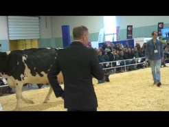 Embedded thumbnail for Suprême Laitier 2017 - 5 ans – Holstein