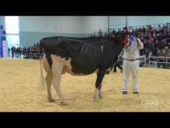 Embedded thumbnail for Suprême Laitier 2017 – 2 ans Senior – Holstein
