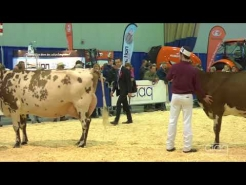 Embedded thumbnail for Suprême Laitier 2017 - Grand Championnat - Ayrshire