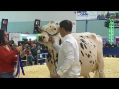 Embedded thumbnail for Suprême Laitier 2017 – Championnat Intermédiaire – Holstein