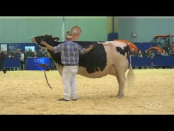 Embedded thumbnail for Suprême Laitier 2017 – Grand Championnat - Holstein