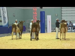 Embedded thumbnail for Suprême Laitier 2017 – Championnat Intermédiaire – Ayrshire