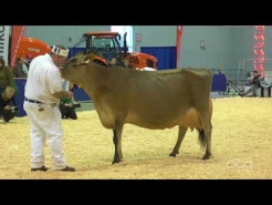 Embedded thumbnail for Suprême Laitier 2017 – Vache adulte - Jersey